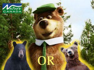 Image of yogi the bear