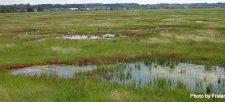 Baie de L'Île-Verte & the Cacouna Marsh