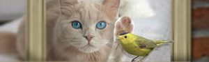 Image of a cat and bird