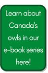 Image of e-Book Download Button