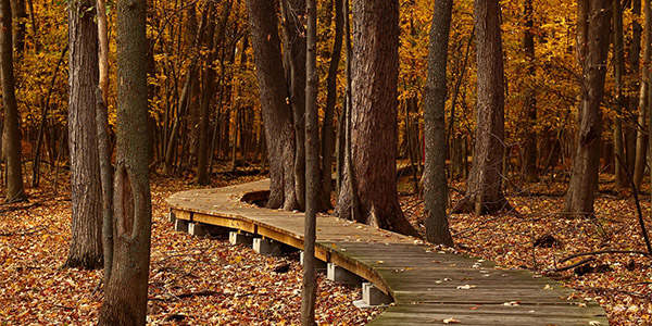 Image of a trail through a fall forest