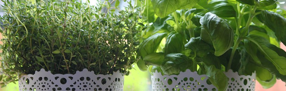 Image of Thyme and Basil