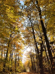 Image of a fall forest by Marika Carter