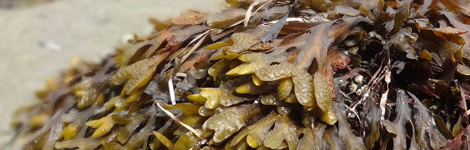 Image of seaweed