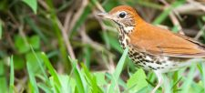 Why make the switch to bird-friendly coffee