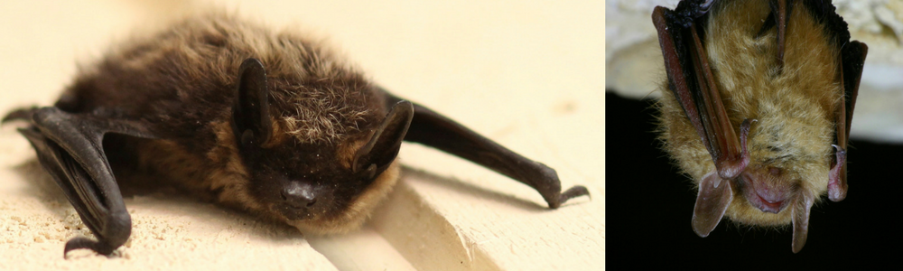 Dispatches from Noway Lake: Home is where the bats are