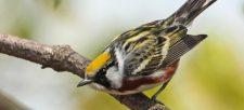 NatureHood Partner spotlight: Prince Edward Point Bird Observatory