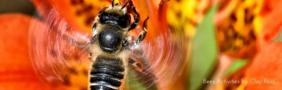 Image of a bee by Clay Ross