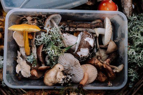 Image of morel mushrooms