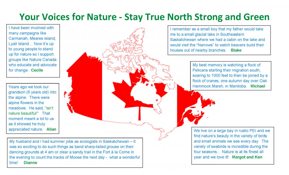 true-north-strong-and-green-member-quotes-april-2017-v2