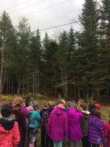 understanding our Nature Hood