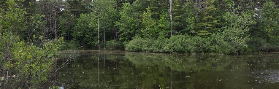 Lac Mud
