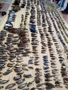 This photo is of 1,800 birds that fatally collided with windows in Ottawa this past year.