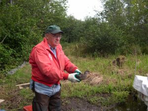 Image of Gordon Kelly releasing a Wood Duck