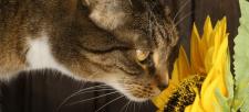 The Healthy Houseplant: Ten Feline-Friendly Selections