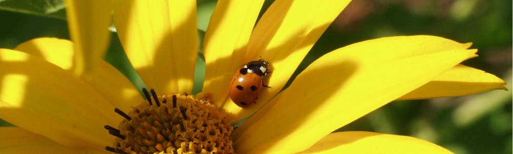 The Insects of Summer