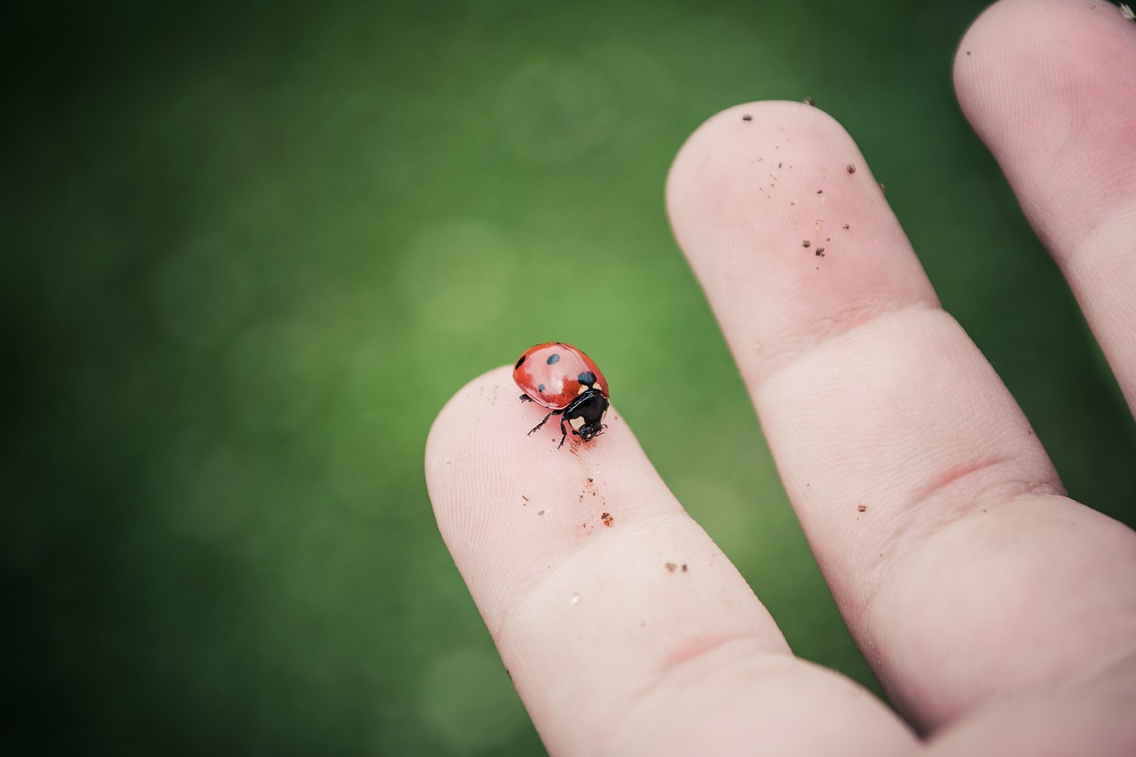 nature canada u2013 the lovely ladybug natural pest controllers for