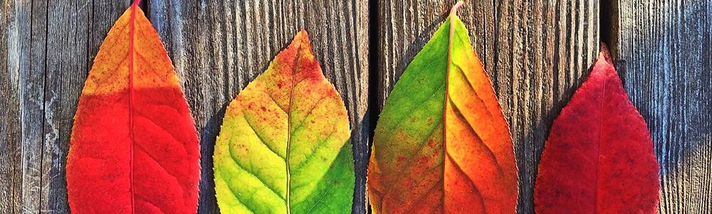 7 Ways to Enjoy an Environmentally Friendly Fall