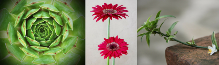 L to R: Hens and chicks, gerbera daisy, spider plant