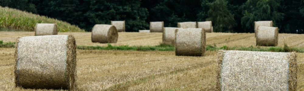 Straw bales in field