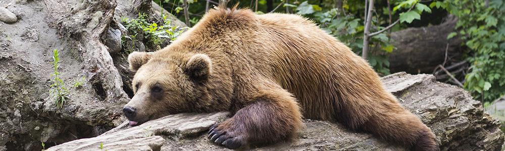 'Tis the Season … To Hibernate