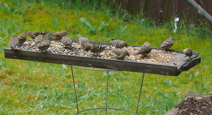 Image of birds feeding