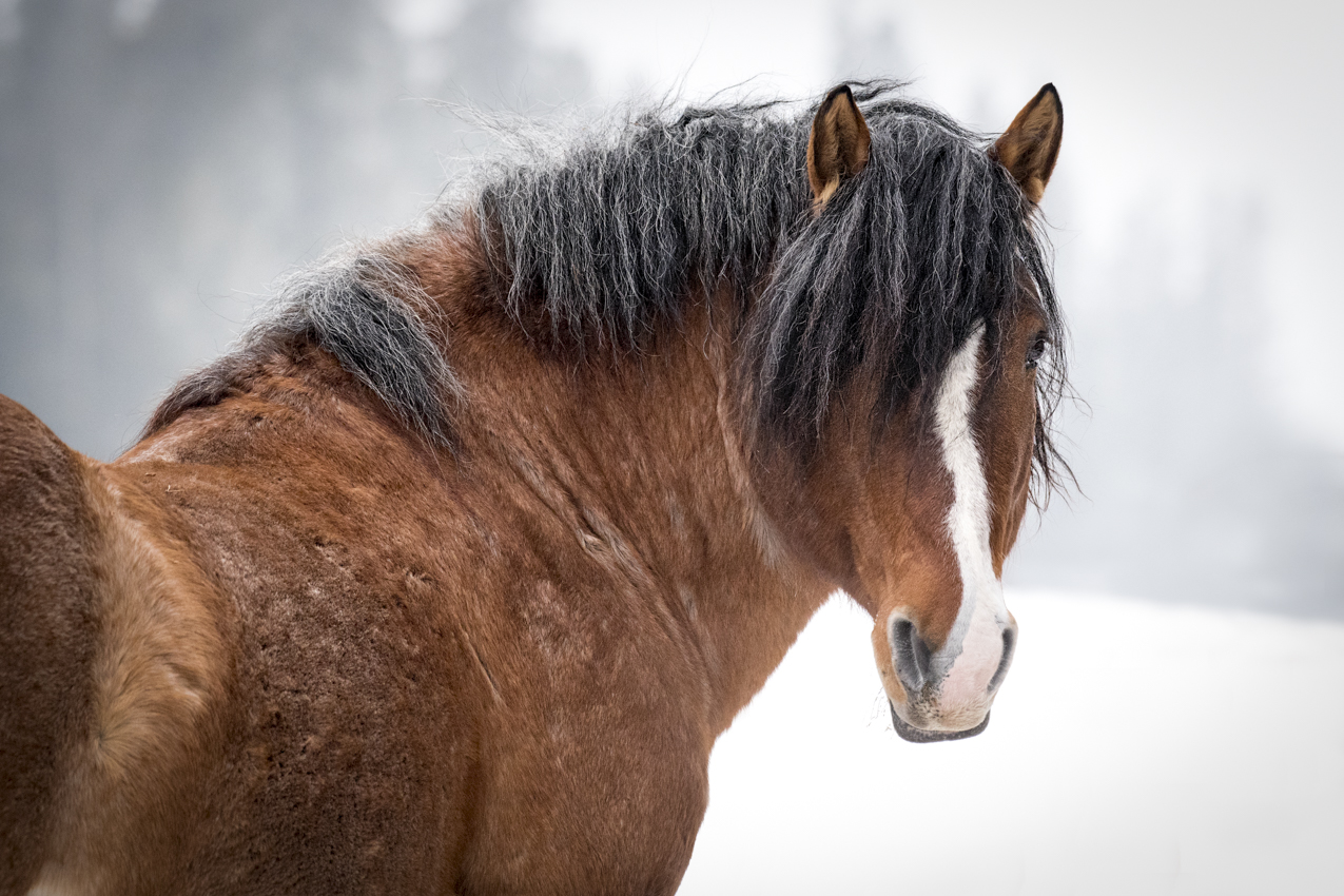 Nature Canada 2018 The Year To See Alberta S Wild Horses