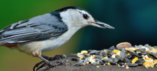 Spring Bird Feeding: Tips And Tricks To Get Birds Into Your Backyard!