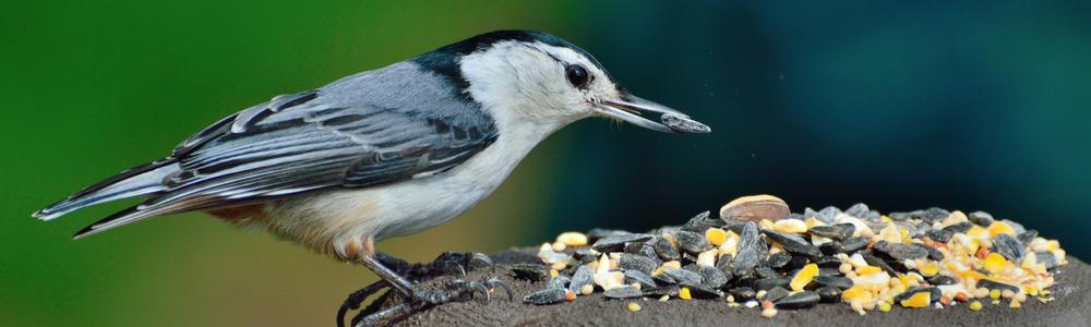 Spring Bird Feeding: Tips And Tricks To Get Birds Into Your Backyard!
