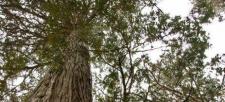 Environment Canada Failed to Provide National Biodiversity Leadership