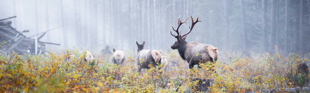 A Warming Planet – Can Wildlife Keep up with the Changes?
