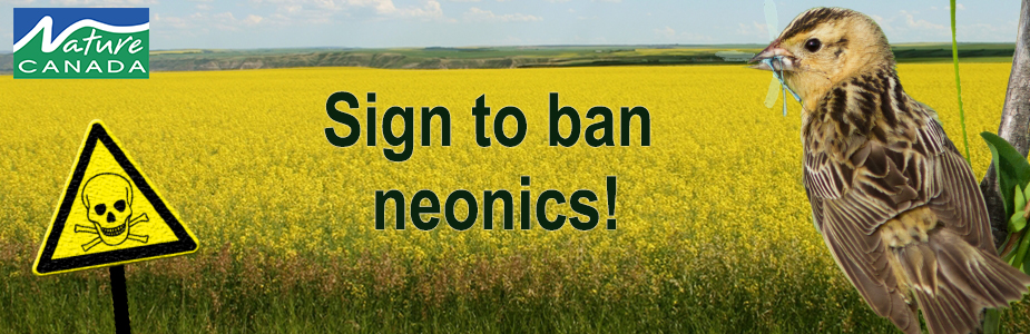 Image of neonics petition header