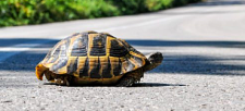 8 Things to do this Summer: As told by Canadian Turtles
