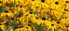 Add Some Bird Friendly Plants to your Garden!