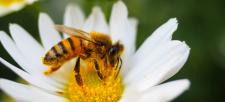 An Update: Neonics vs Bees, Birds and the Planet