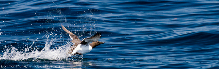 Finally, Scott Islands Marine National Wildlife Area Established