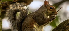 Squirrel! Can nature reduce the symptoms of ADHD?