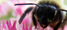 Health Canada Proposes Too-long Phase-out of Neonics Harming Birds and Bees
