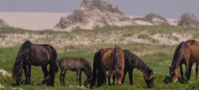 "Sable Island – ""The Smile of the Atlantic"""