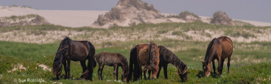 """Sable Island – """"The Smile of the Atlantic"""""""