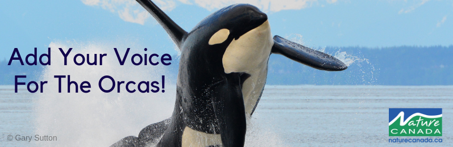 Image of Orca Petition Page