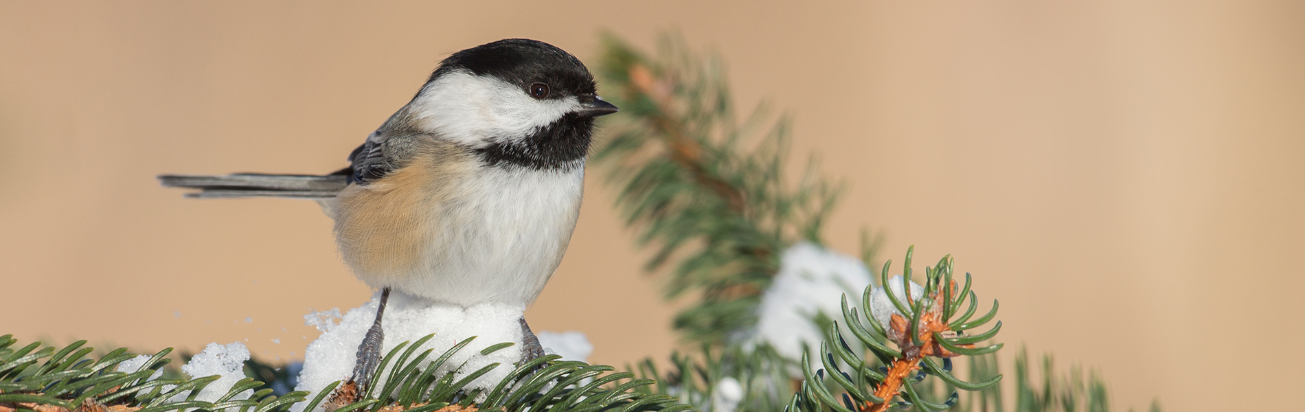 Making your own suet for birds this winter!