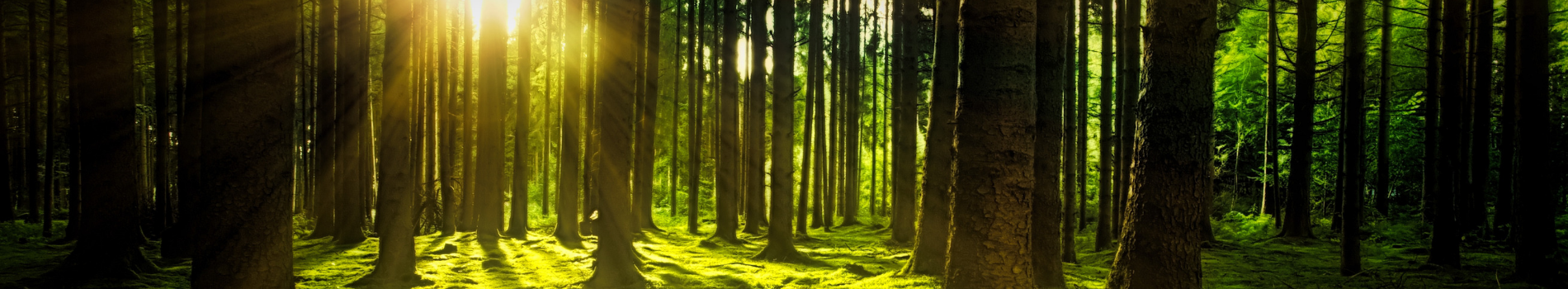 Women for Nature – Elizabeth Kilvert