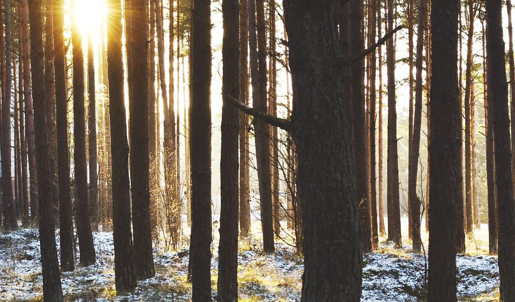 Image of a winter forest