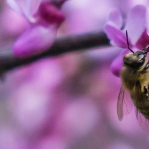 Image of a Bee by Sandy Nelson